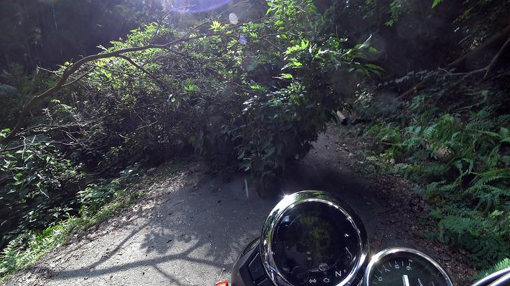 モンキー125と林道3