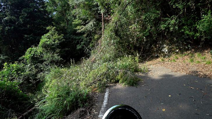 モンキー125と林道2