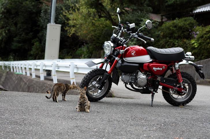 モンキー125と猫