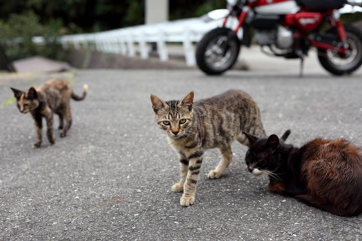 ネコとバイク